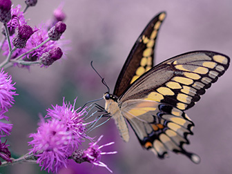 Butterflies, drought and late summer colour