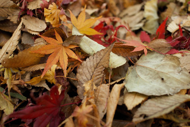 Essential jobs to do in our gardens in Autumn